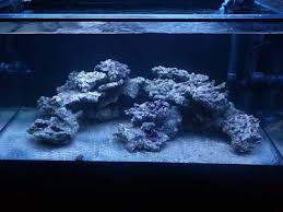 Floating Aquascape Reef2reef Saltwater And Reef Aquarium Forum - minimalist aquascaping page 71 reef central online community