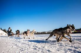 climate change is rerouting world famous sled dog race