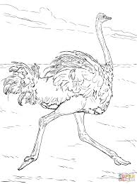 ostriches and elephants in a zoo coloring page free printable