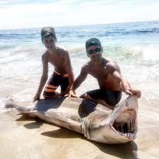 original 13 year old reels in shark off long beach island beach