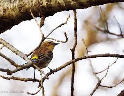 birds of winter wildlife wednesday january 2017 my gardener says u2026