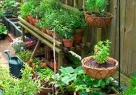 vegetable garden ideas for beginners home design ideas