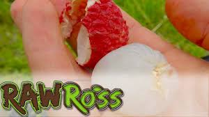 fruit similar to lychee how to pick and eat lychees and other tropical fruits youtube