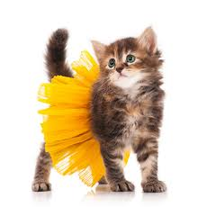 Halloween Costumes Cats 20 Cat Halloween Costume Ideas Pictures Cattime