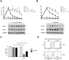 regulation of memory b cell survival by the bh3 only protein puma