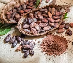 cuisiner cru cacao cru découvrez ses bienfaits et comment le cuisiner top santé