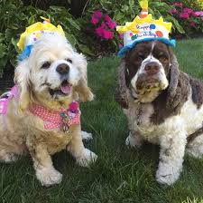 dog birthday party ideas to host a dog birthday party fidose of reality