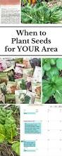 flagstaff native plant and seed best 25 date plant ideas on pinterest raised gardens when to