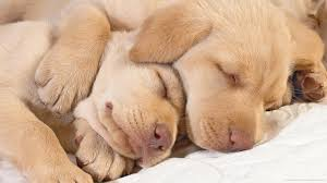 1440x900 two cutest dogs ever wallpaper