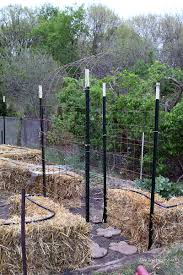 Build A Trellis by Building A Trellis For Straw Bale Gardening Tomatoes U2013 Dan330