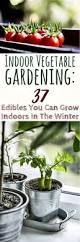 When Should I Start Planting My Vegetable Garden by Indoor Vegetable Gardening 37 Edibles You Can Grow Indoors In The