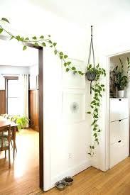 ideas for home decoration home decor plants home decoration plants best indoor plant decor