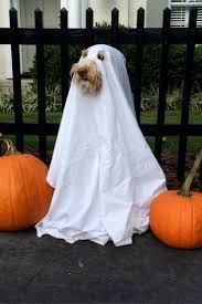 Halloween Costume 25 Dog Costumes Ideas Dog Halloween
