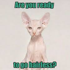 Meme Hair Removal - 23 best laser hair removal it s funny stuff images on pinterest