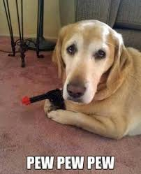 Pew Pew Meme - i can has cheezburger pew pew pew funny animals online