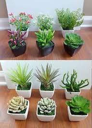 mini plants 3 mini potted artificial flowers unkillable succulents plants with