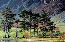monty don a pine romanc daily mail