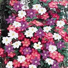 Plants For Pergolas by Garden Design Garden Design With Best Climbing Plants For
