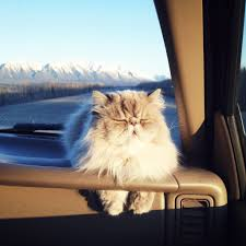 how to travel with a cat images How to travel with a cat plus adorable kitty pics food wine jpg
