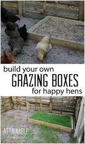 save money on chicken feed build these grazing boxes for your