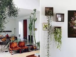 fancy indoors plant combination ideas plants wall for green and