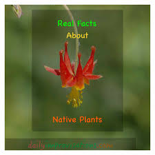 native idaho plants real facts about native plants