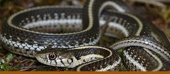 Backyard Reptiles Reptile House U2014 City Of Albuquerque