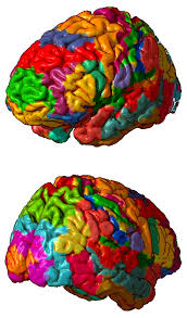 Brain Mapping Brodmann Area Wikipedia