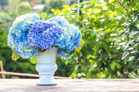 flower hydrangea how to make cut hydrangeas last longer reader s digest