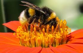 pollination cool kid facts