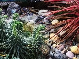 organic gardening blog vegetable garden blog san diego california