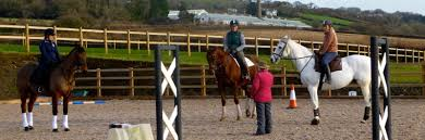 Are Horses Color Blind Home Retraining Of Racehorses