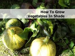 Shade Garden Vegetables by Vegetables In Shade Jpg