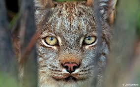 Alaska Wildlife images Discover alaska wildlife outdoor photographer jpg