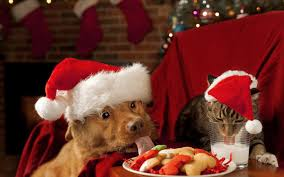 dog christmas christmas wallpaper with a dog and a cat wearing christmas hats