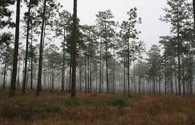 Georgia forest images Membership georgia forestry association jpg