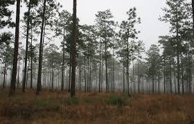 Membership georgia forestry association