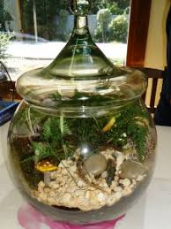 terrarium care 101 town and country nurseries