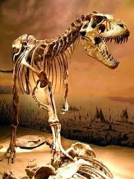 les 60 meilleures images du tableau megafauna sur