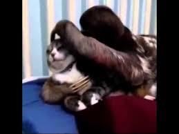 Sloth Whisper Meme - sloth whispers to cat youtube