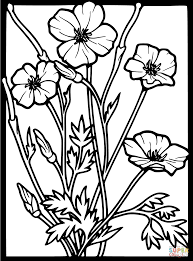 poppies coloring pages free coloring pages