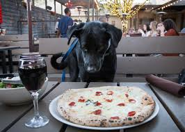 Round Dining Room Sets Friendly Atmosphere 15 Of The Most Dog Friendly Restaurants Perfect For Dining With Dogs