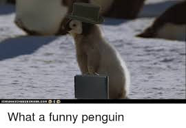 Funny Penguin Memes - 25 best memes about funny penguin funny penguin memes