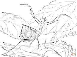 iris praying mantis coloring page free printable coloring pages
