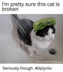 Cat Memes Tumblr - i m pretty sure this cat is broken source tumblrtimeywimeyjedi
