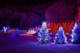 Light String Christmas Tree by String Christmas Lights On Outdoor Trees Christmas Lights Decoration