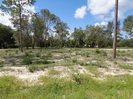find homes and land for sale in interlachen and putnam county
