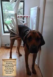 Dog Blinds 109 Best Pets Blinds Images On Pinterest Window Treatments