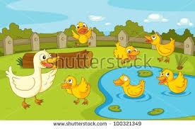 duck pond stock images royalty free images u0026 vectors shutterstock