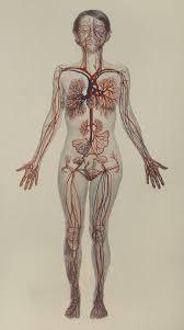 Human Body Anatomy Pics 411 Best Anatomy Images On Pinterest Anatomy Anatomy Art And